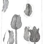 Tulipanomania #6