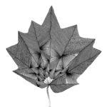 Flora magica #4