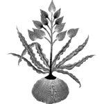 Flora magica #1